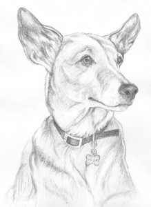 Dog drawings millie-219x300.jpg