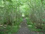 Path in Foxley Wood© Copyright Ashley Dace and licensed for reuse under this Creative Commons Licence, via Wikimedia Commons